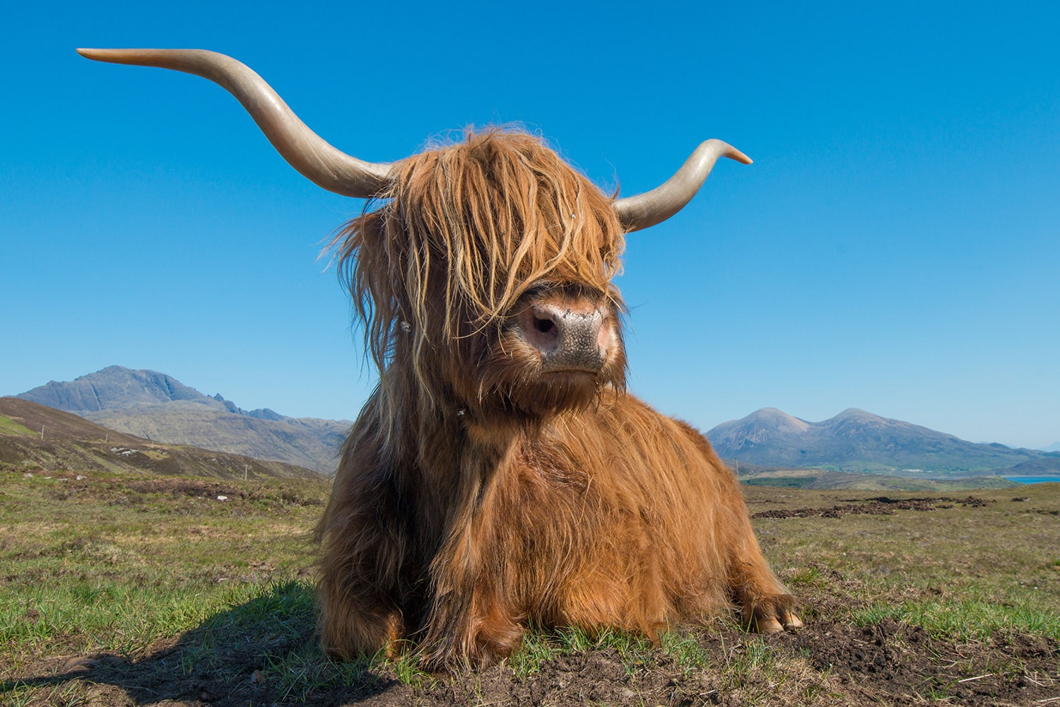 An image of a Highland cow, captured on the Isle of Skye during our Skye High tour