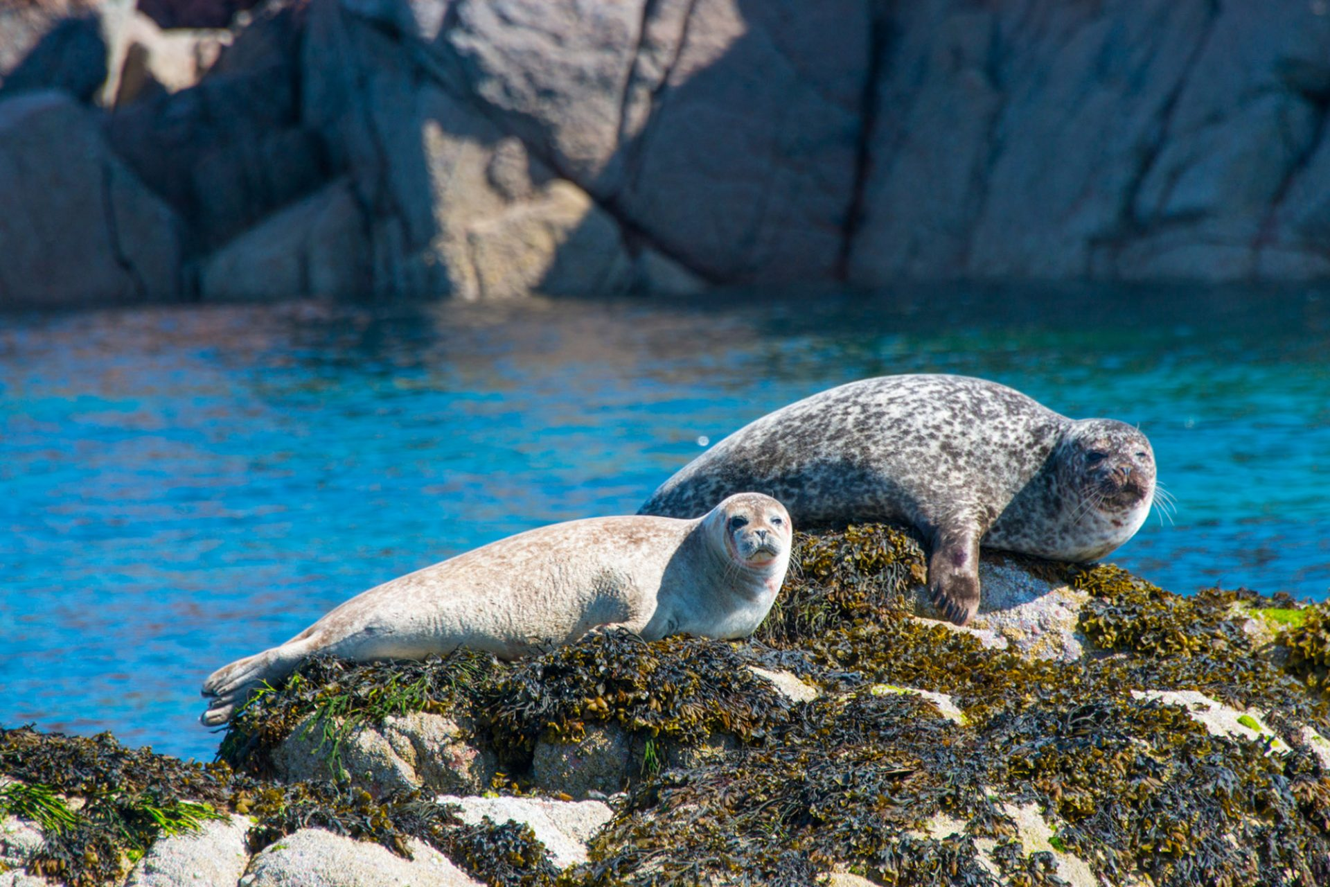 Two seals in Iona, a small island which features in our tour of the Scottish Islands